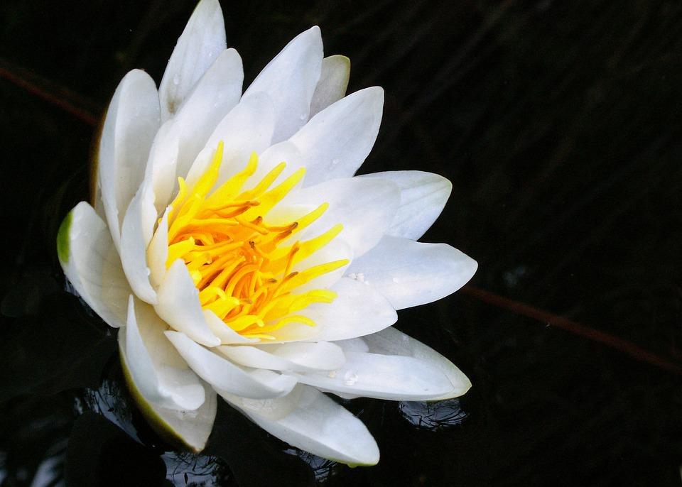 Flower, Plant, Nature, Petal, Summer