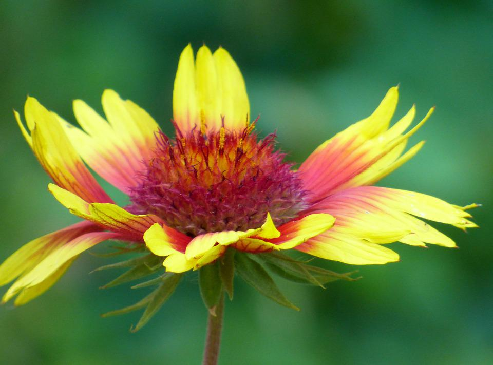 Free photo Petal Yellow Nature Garden Floral Leaves Flower - Max Pixel