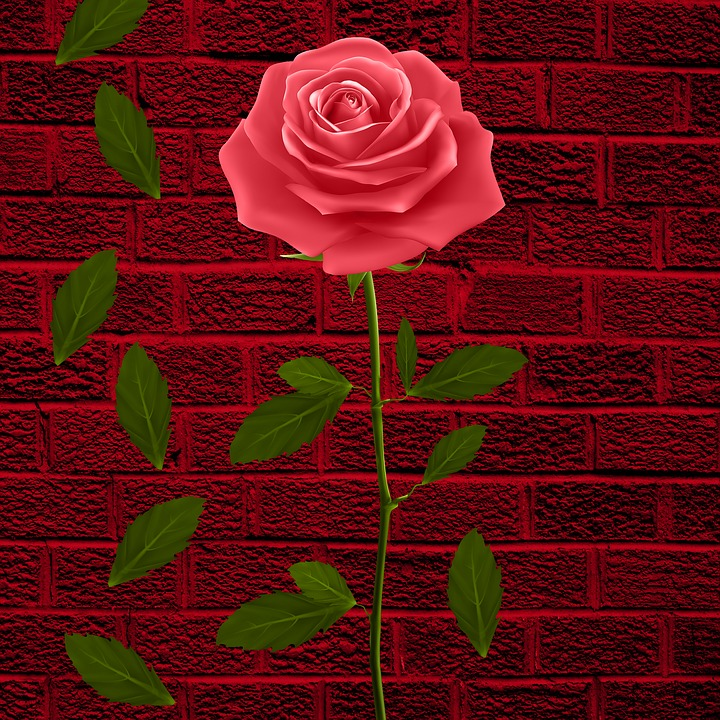 Flower, Flowers, Petals, Rosa, Leaves, Wall, Background
