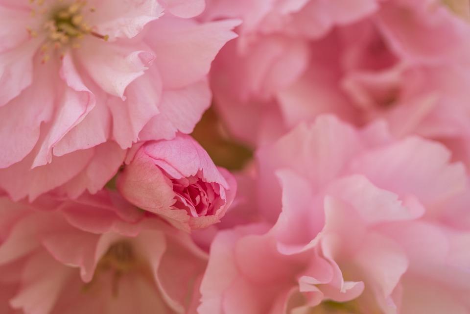 Flower, Flowers, Bloom, Blossom, Petals, Spring