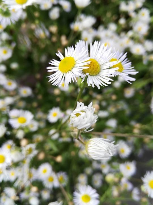 Flowers, Petals, Bush, Wild, Buds, Nature, Garden
