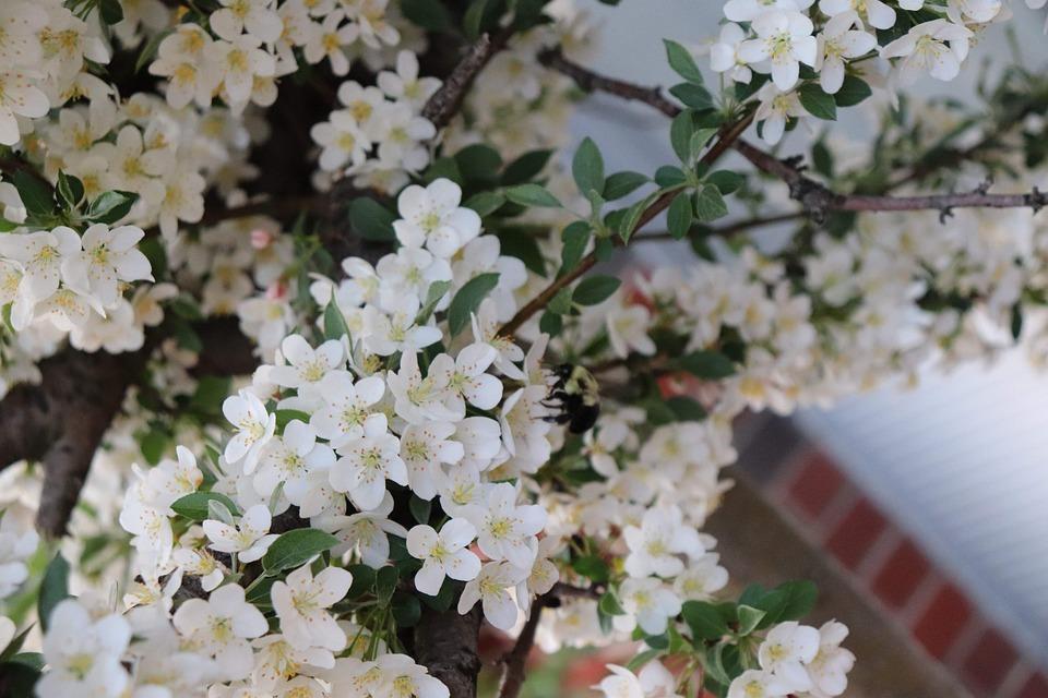 Spring, Bloom, Flowers, Petals, Blossom, Floral, Season