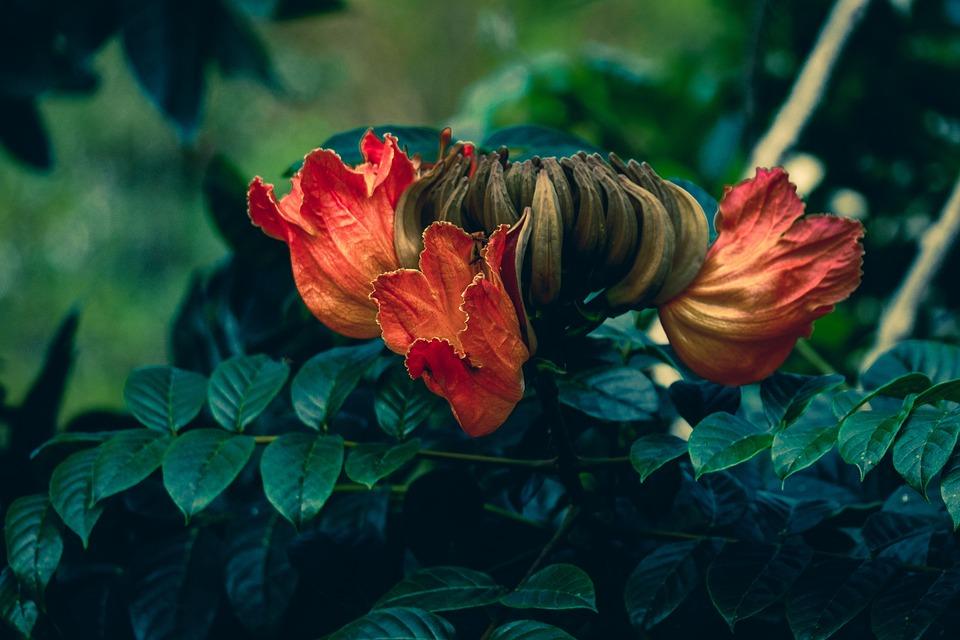 Flowers, Petals, Leaves, Foliage, Bush, Floral, Botany