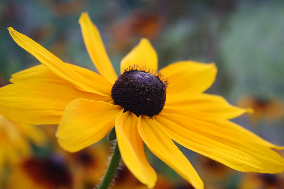 Flower, Petals, Bloom, Blossom, Floral, Summer