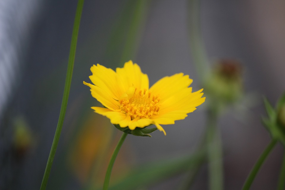 Flower, Yellow, Spring, Bloom, Nature, Blossom, Petals