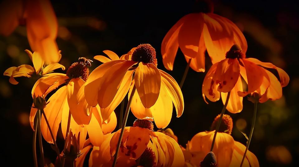 Flowers, Orange, Orange Petals, Orange Blossom, Petals