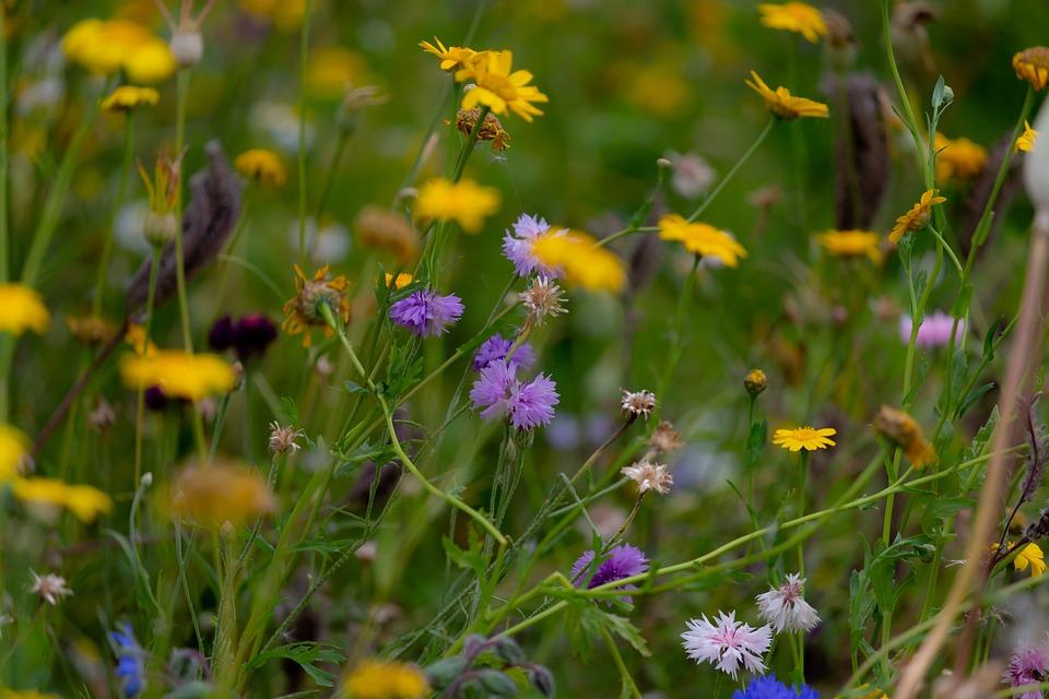 Flowers, Petals, Leaves, Foliage, Stem, Plants, Grass