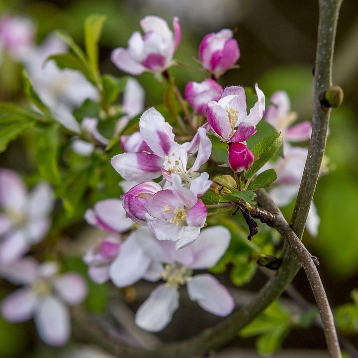 Flowers, Trees, Stems, Branches, Petals