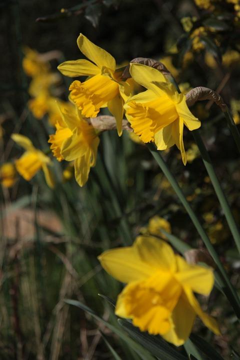 Garden, Petals, Nature, Flowers, Flower, Spring, Petal