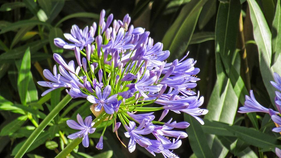 Flowers, Petals, Summer, Flower, Plant, Nature, Garden