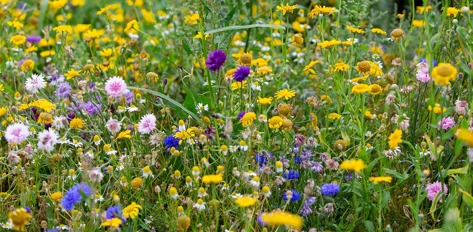 Flowers, Petals, Leaves, Foliage, Stem, Plants, Grass
