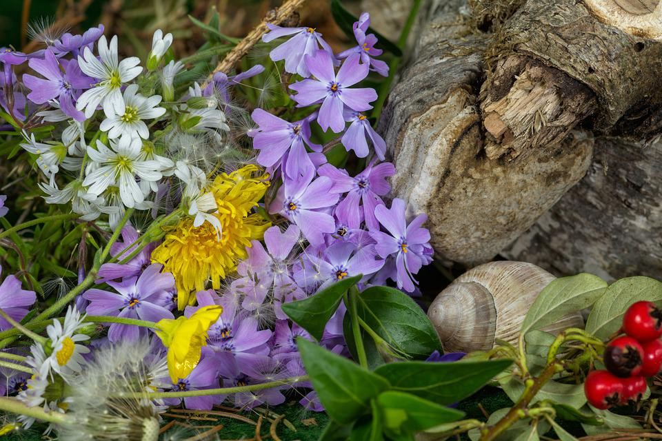 Meadow, Flowers, Ground Cover, Petals, Snail