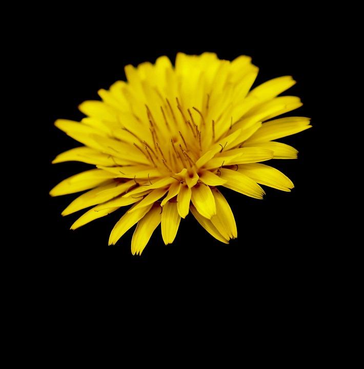 Flower, Nature, Macro, Spring, Pestle, Petals, Pollen