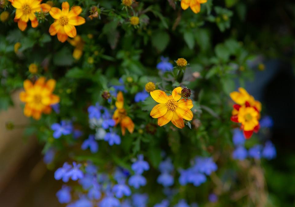 Flower, Petals, Nature