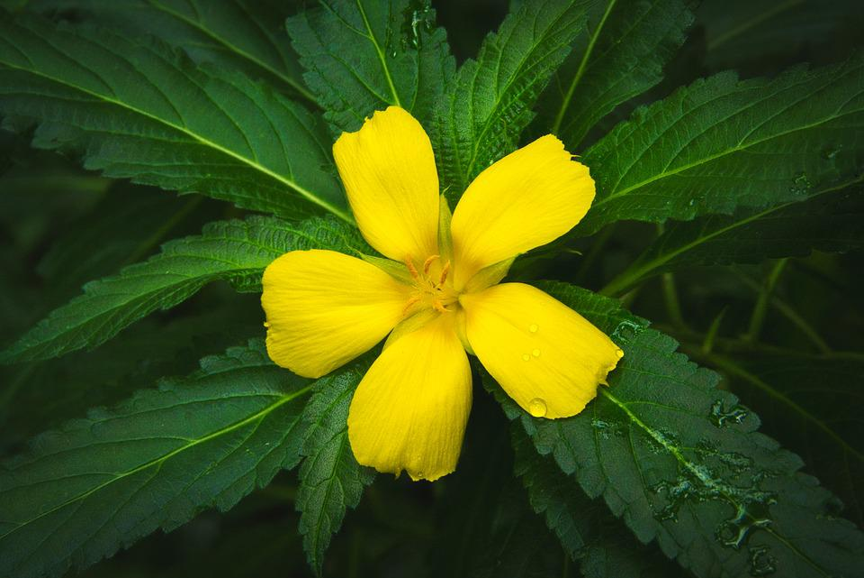 Petals, Yellow, Blossom, Bloom, Flower, Plant, Nature