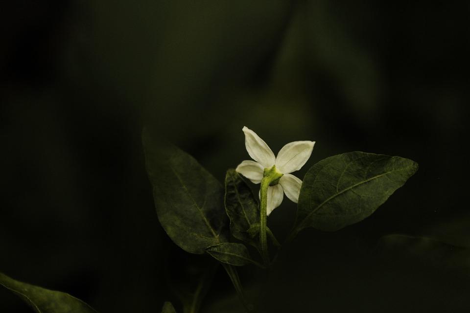 Nature, Flowers, Plant, Blossom, Petals, Flowering