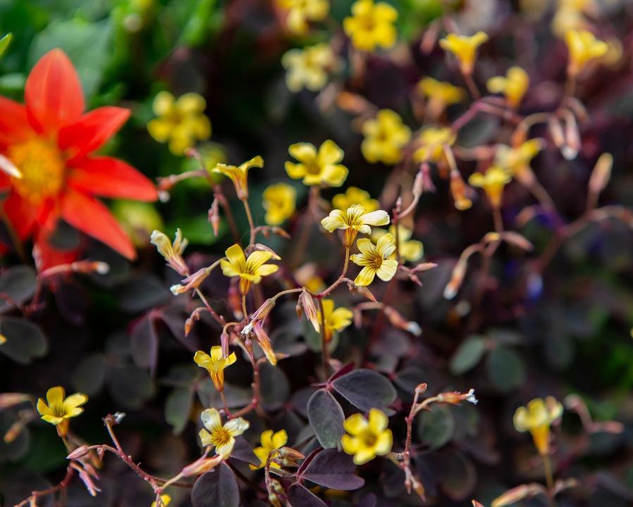Flower, Yellow, Petals, Nature