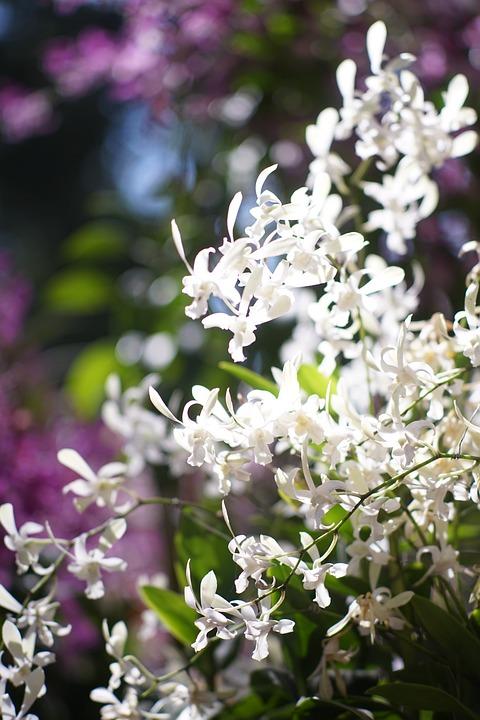 Orchid, Flowers, Petals, Bush, Flora, Botany, Orchid 4