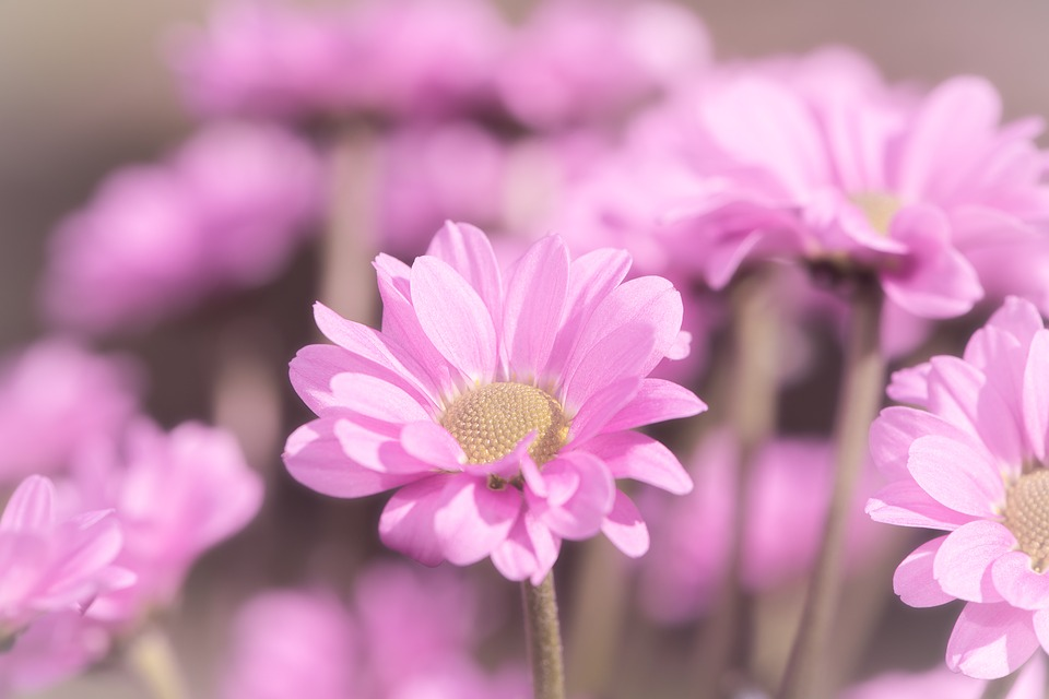 Flowers, Pink, Pink Flowers, Beautiful, Petals, Close