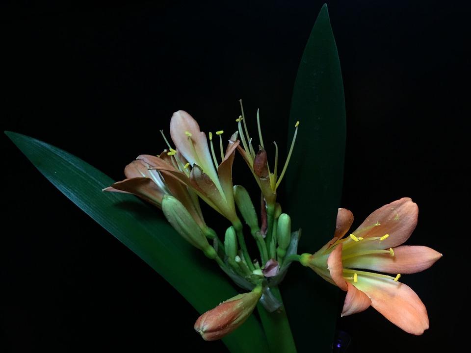 Petals Orange, Pistils, Petals, Pistil, Garden, Plant