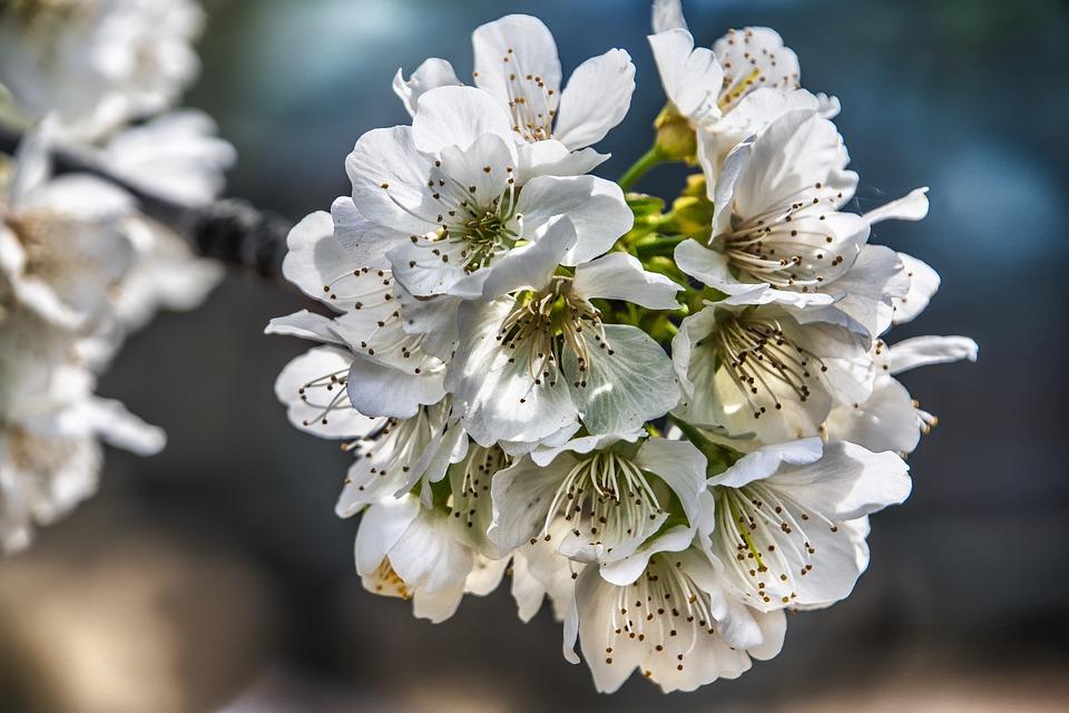 Flowers, Spring, Flower, Plant, Petals, Branch