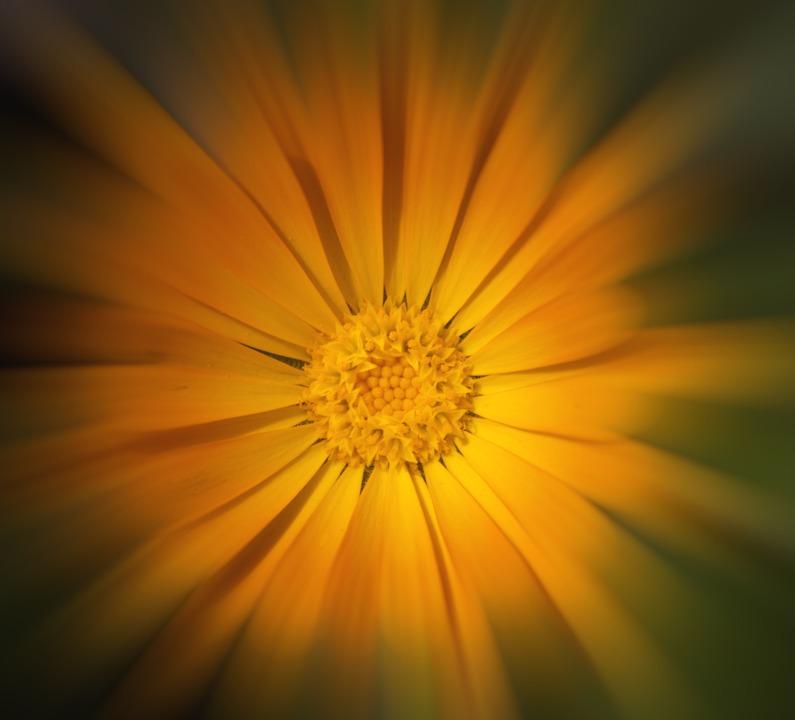 Bloom, Spring, Flowers, Floral, Petals, Orange