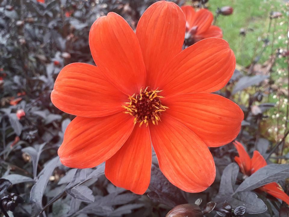 Flower, Nature, Plant, Bloom, Spring, Garden, Petals