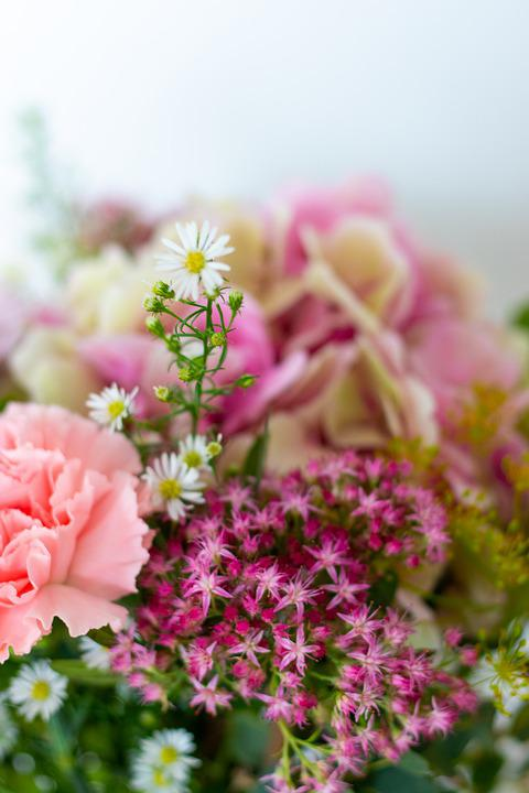 Stonecrop, Asters, Flowers, Carnation, Bouquet, Petals