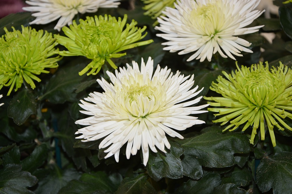 White flowers list image collections flower decoration ideas list of white flowers image collections flower decoration ideas amazing kinds of white flowers gallery images mightylinksfo Image collections