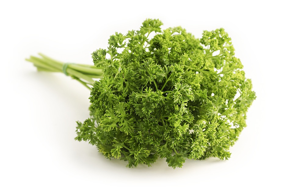 Parsley, Curled, Petroselinum Crispum, Hossein, Peterle