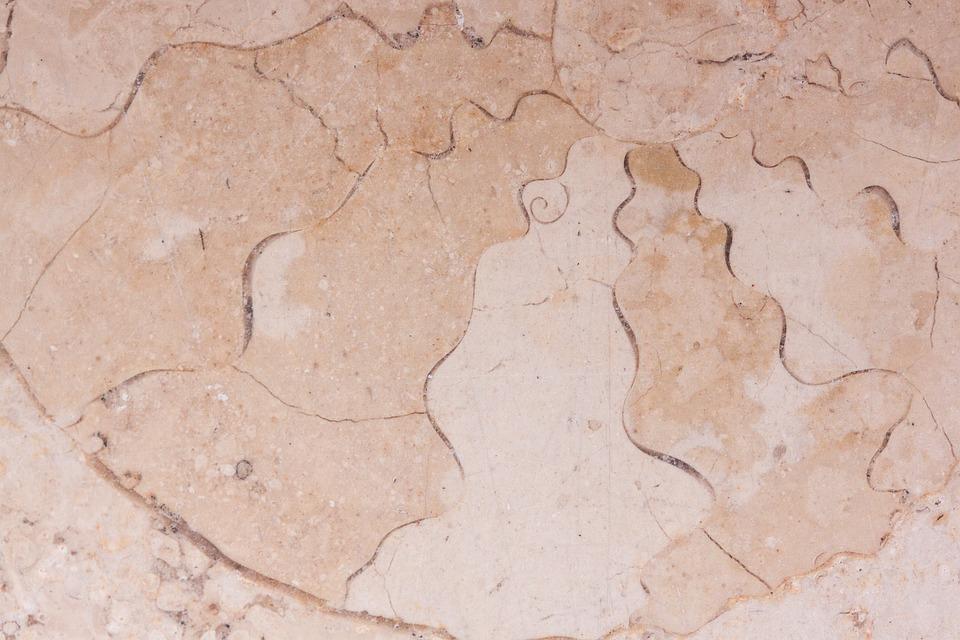 Petrification, Fossil Nautilus, Fossil