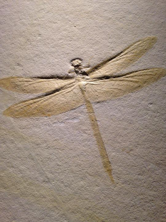 Dragonfly, Petroglyph, Insect