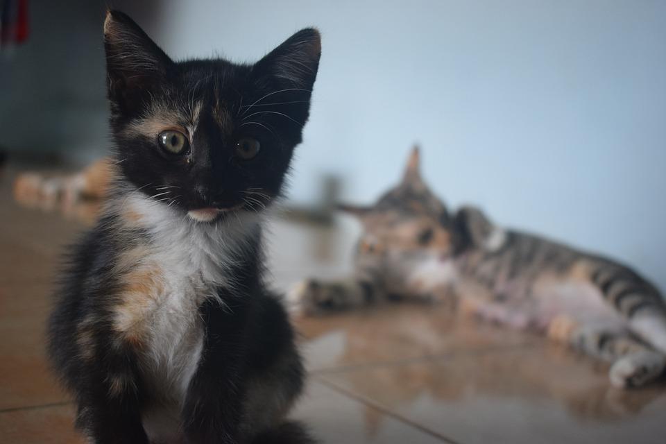 Cats, Pets, Animal, Portrait, Friendship, Kitty