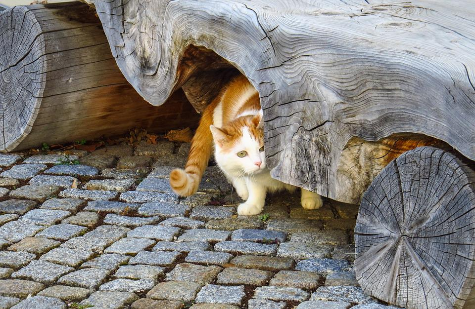 Cat, Pets, Bank, Wooden Bench, Old