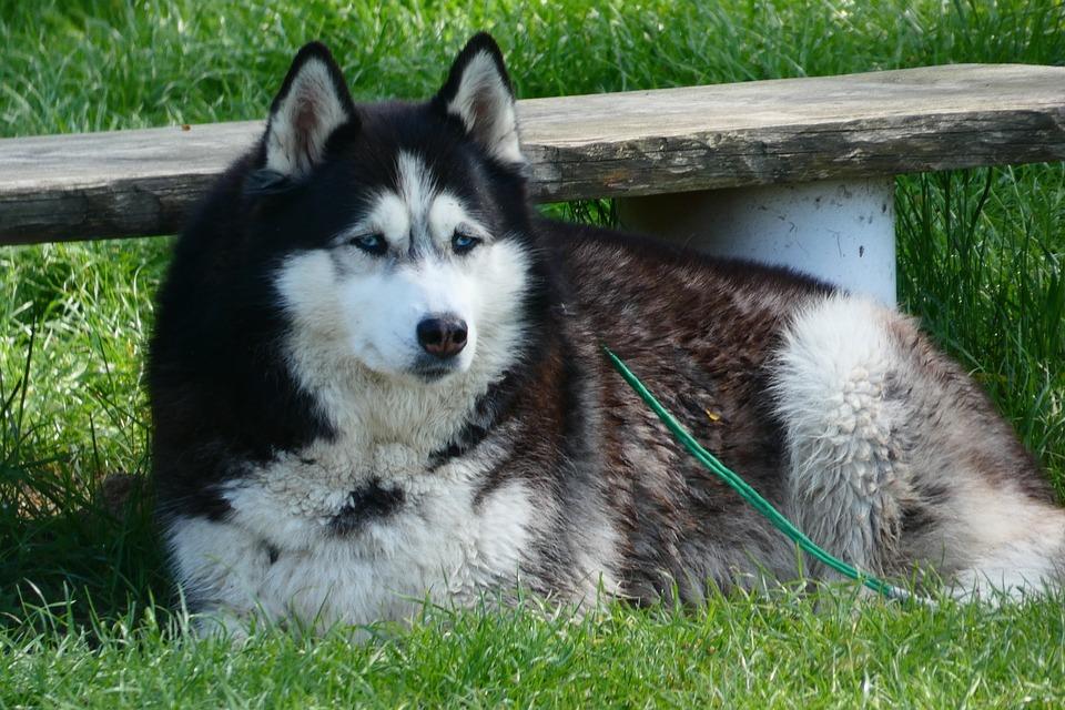 Mammals, Dog House, Animals, Lawn, Charming, Pets