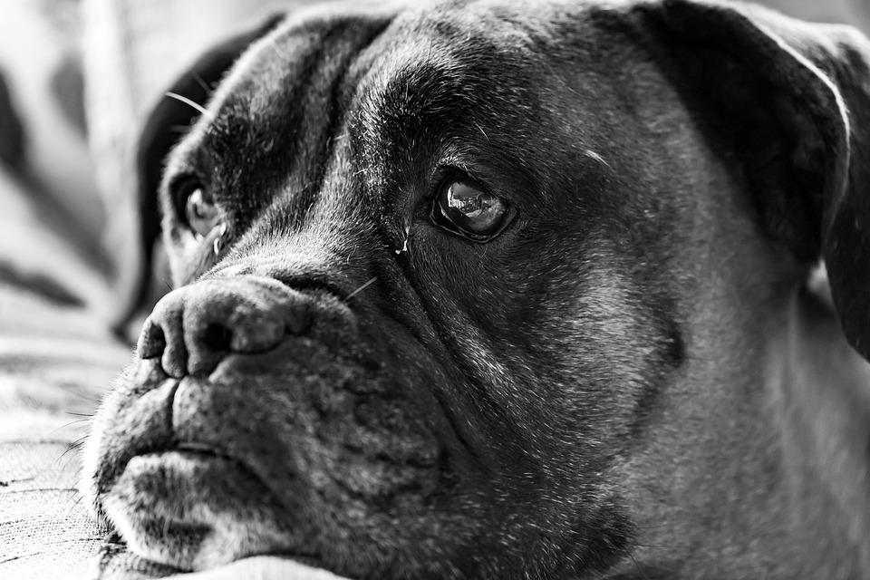 Indoors, Close-up, Pets, Animals, Domestic