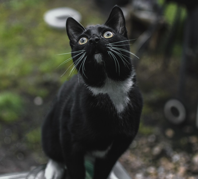 Cat, Animals, Nature, Fur, Charming, Mammals, Pets