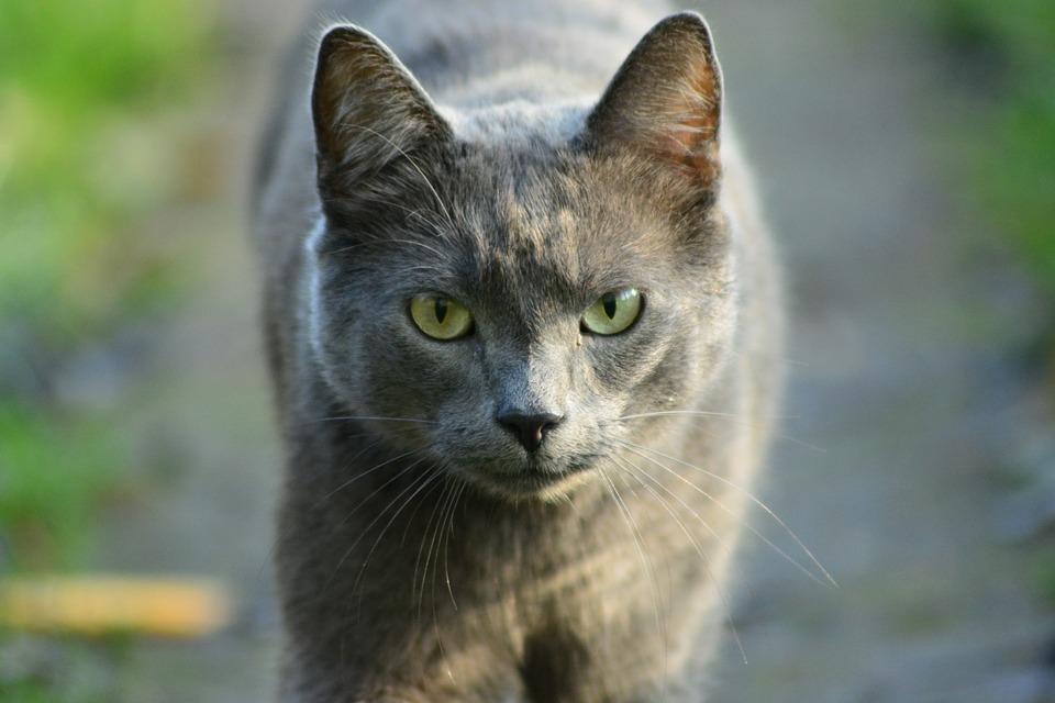 Animals, Charming, Mammals, Nature, Cat, Pets