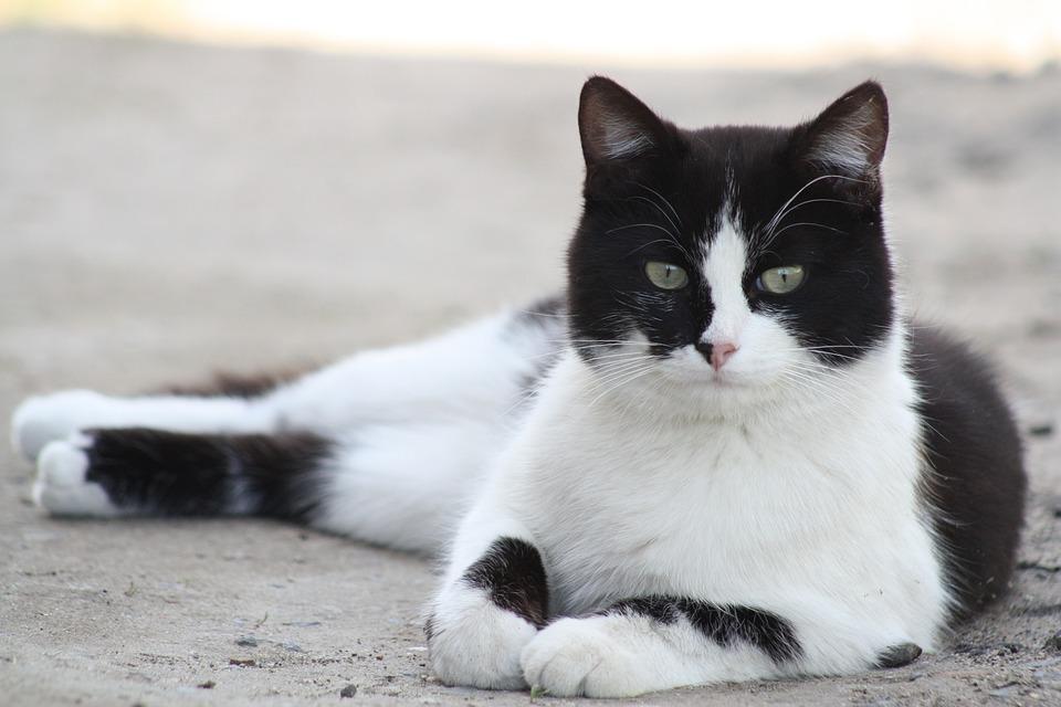 Cat, Animals, Cat Person, Pets, Pet, Cat Eyes