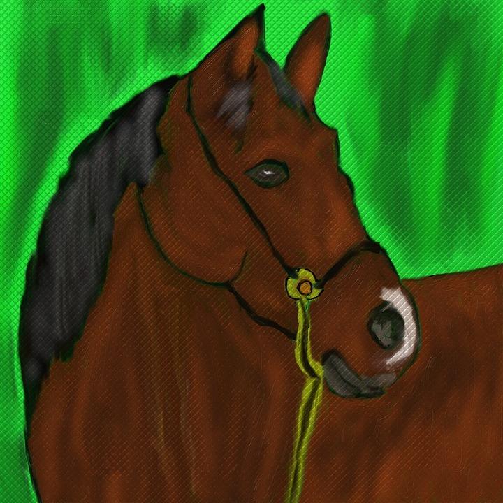 Horse, Horse Head, Stallion, Pferdeportrait, Pony