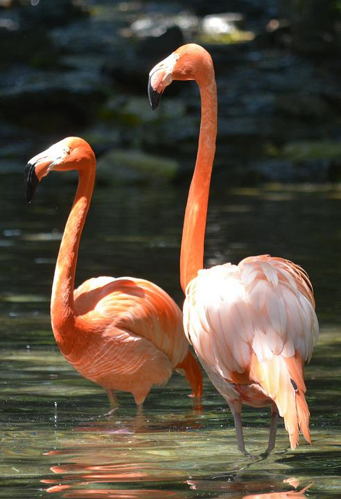 Pink Flamingo, Philadelphia Zoo, Birds