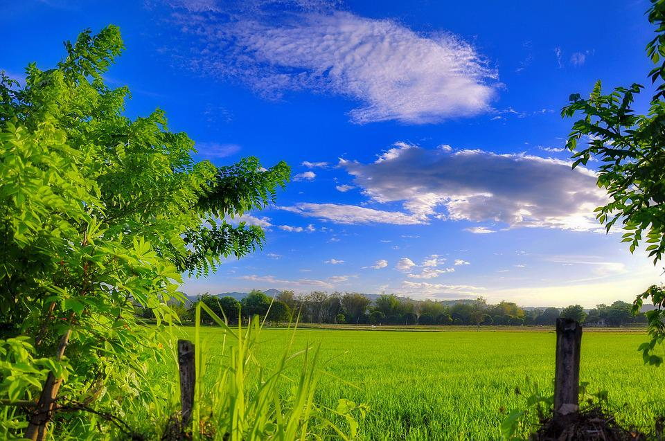 Philippines, Tropical Landscape, Green, Fileds, Plants