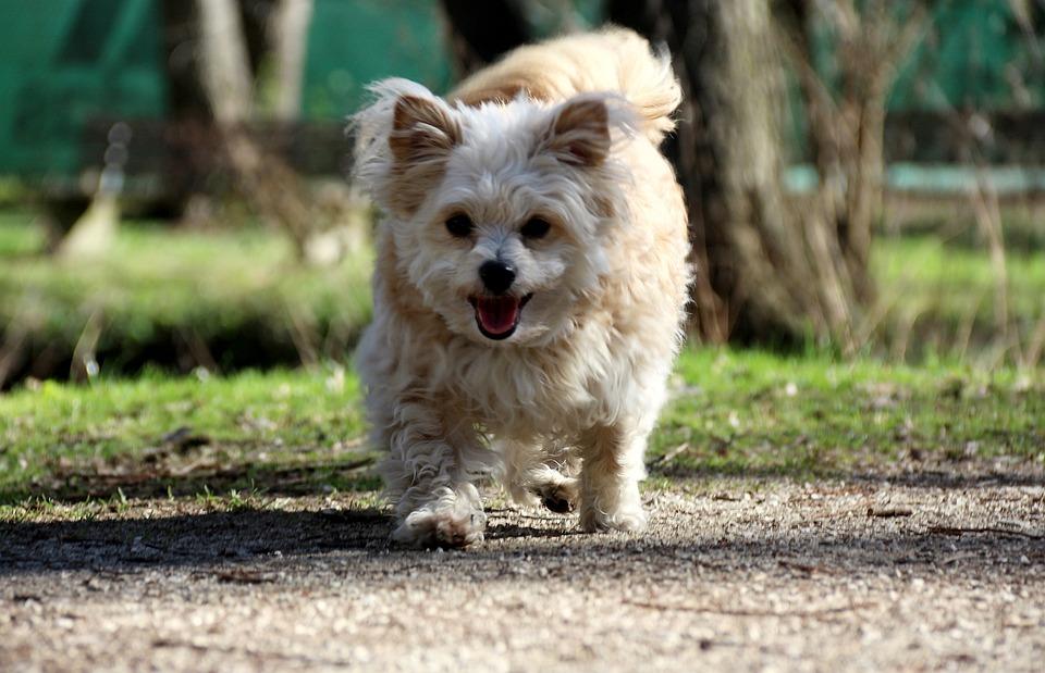Dog, Happy, Photo, Spring, Summer