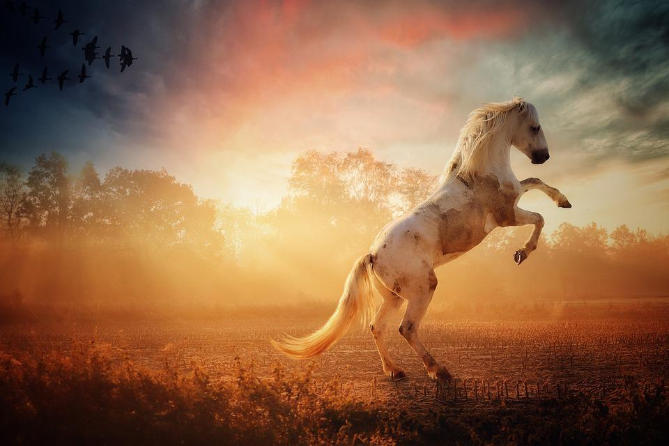 Horses, Photo Montages, Sunshine, Fantasy, Nature
