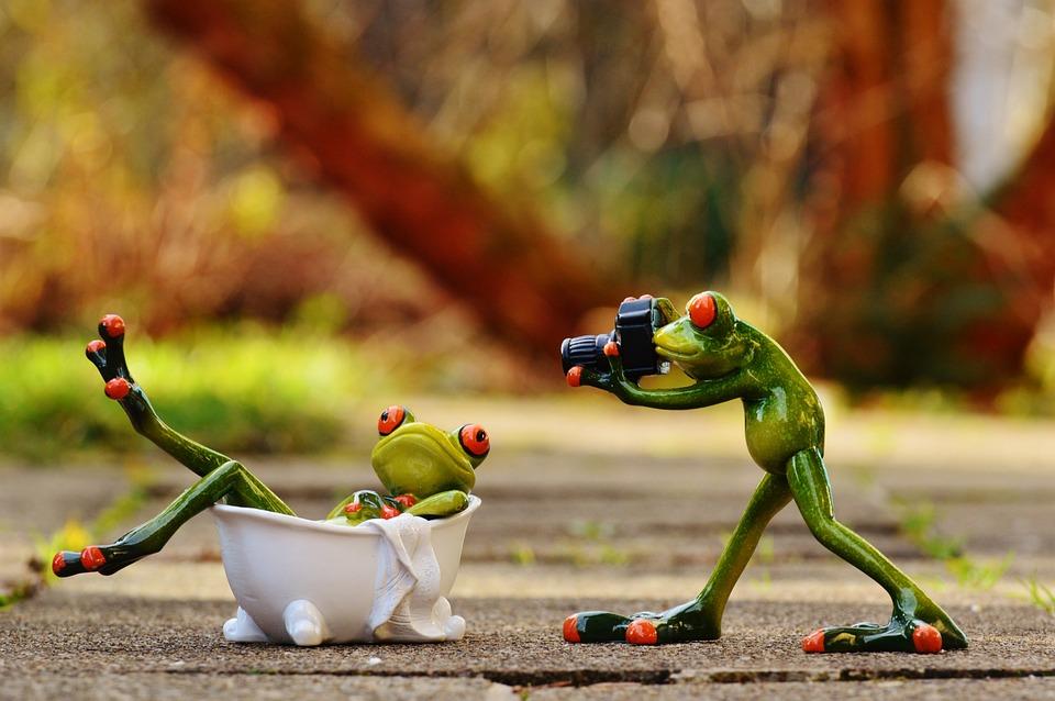 Frog, Bath, Photo Shoot, Photographer, Photograph, Swim