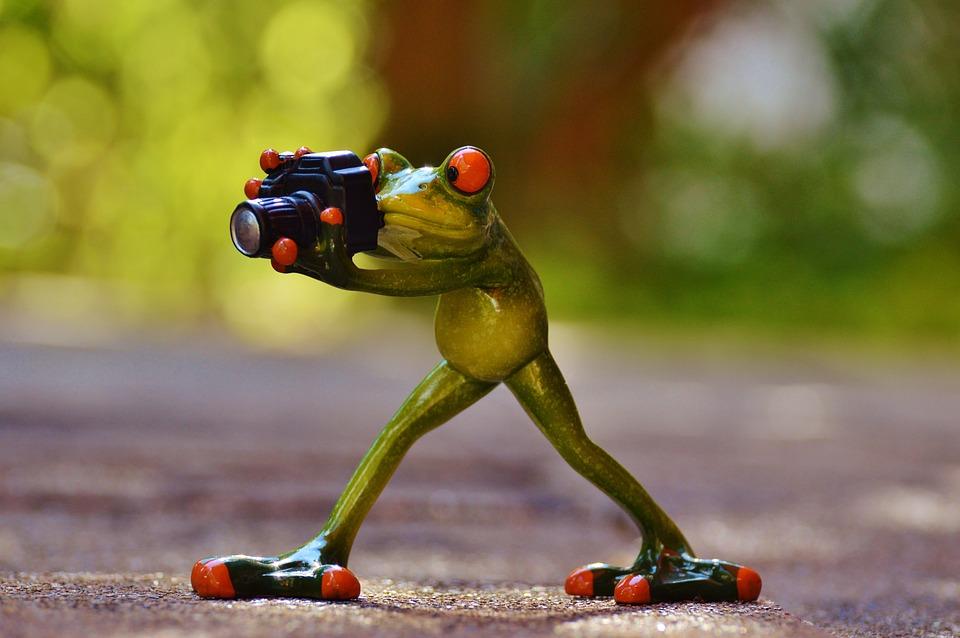 Photographer, Frog, Funny, Green, Animal, Animal World