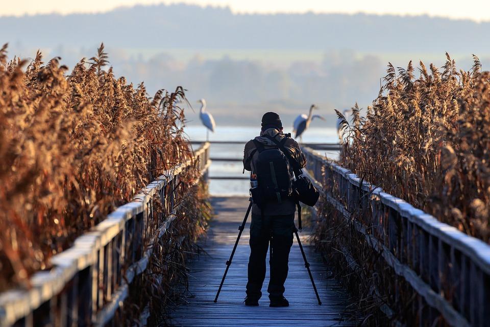 Photographer, Spring Lake, Egret, Nature, Landscape