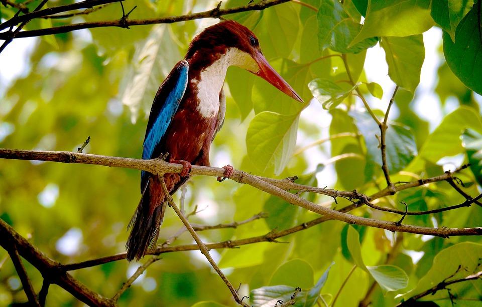 Nature, Kingfisher, Photography, Photographer, Photos