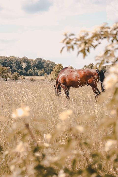 Horse, Horses, Nature, Landscape, Love, Photography