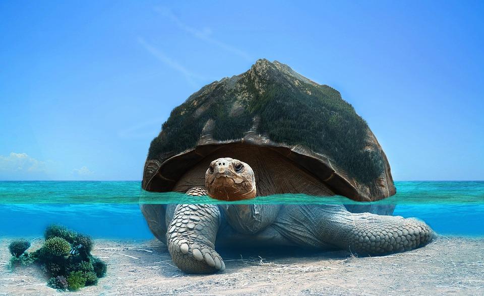 Tortoise, Water, Photoshop, Sea, Ocean, Underwater